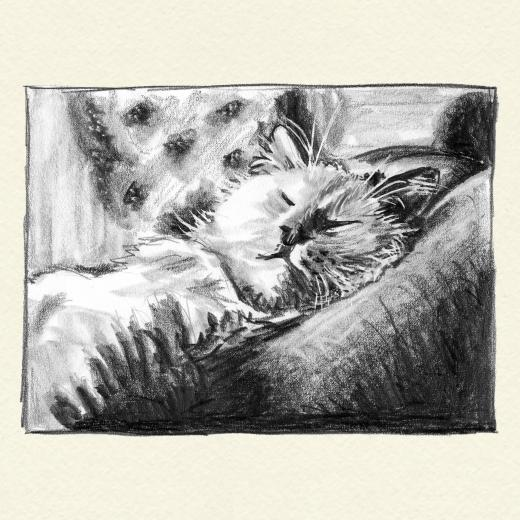 Drawing of a sleeping cat