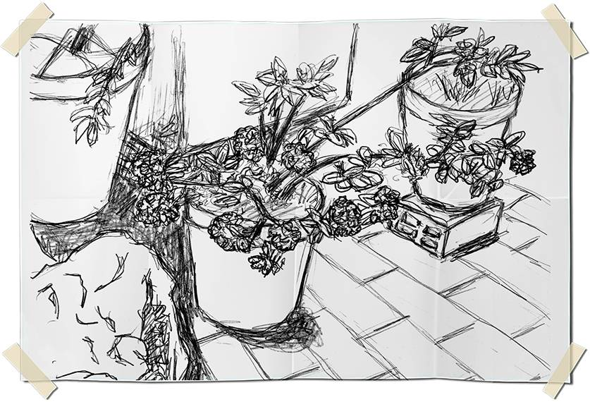 Graphite drawing - pots of dried flowers