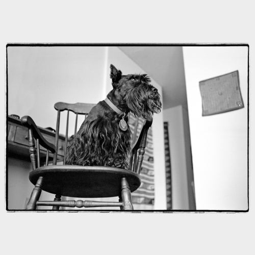 Dog standing on wooden chair