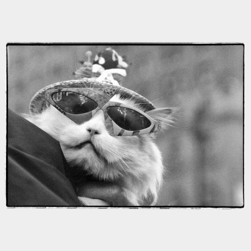 Cat with weird sunglasses