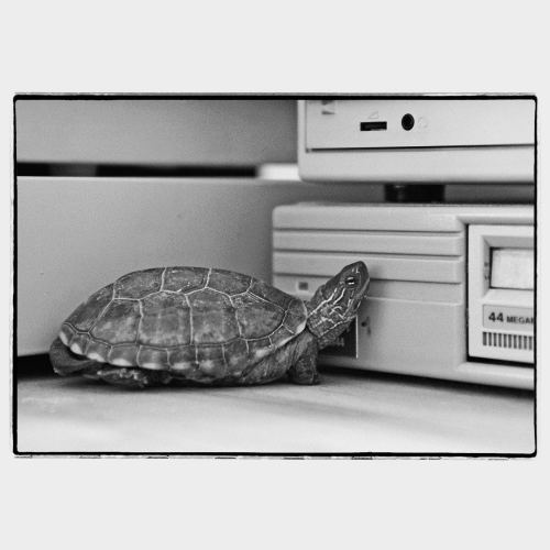Small turtle looking up at vintage computer drive