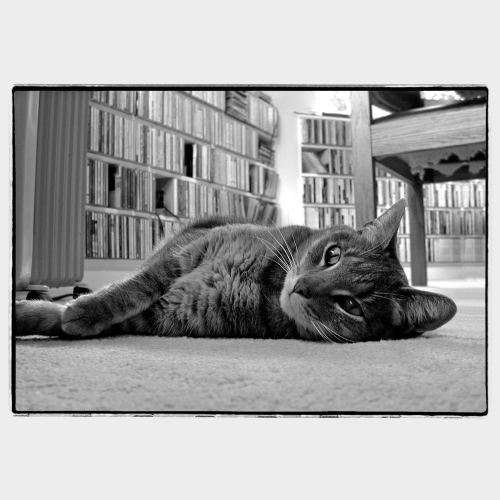Cat laying in front of music CD shelf