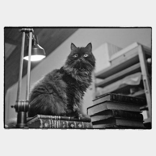Cat sitting on table with old books and lamp