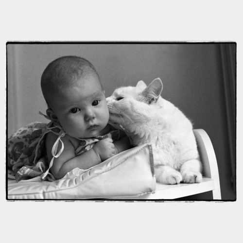 Cat kissing a toddler